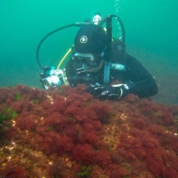 Scientists search for invasive marine species