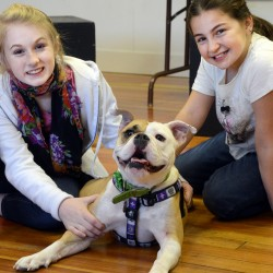 """Kate Fogg (left) and Lana Sabbagh post with English bulldog Zuzu, who plays Sandy with Fogg and Sabbagh's Annie, in Penobscot Theatre's production of """"Annie."""""""