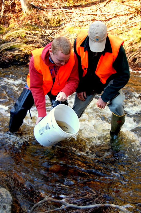 Maine Department of Marine Resources Fish Biologist Colby Bruchs (right) assists Washington Academy student Kyle Gallagher in stocking Creamer Brook in Washington County's Township 19 with young North Atlantic salmon raised from eggs in an East Machias hatchery established by the Downeast Salmon Federation.