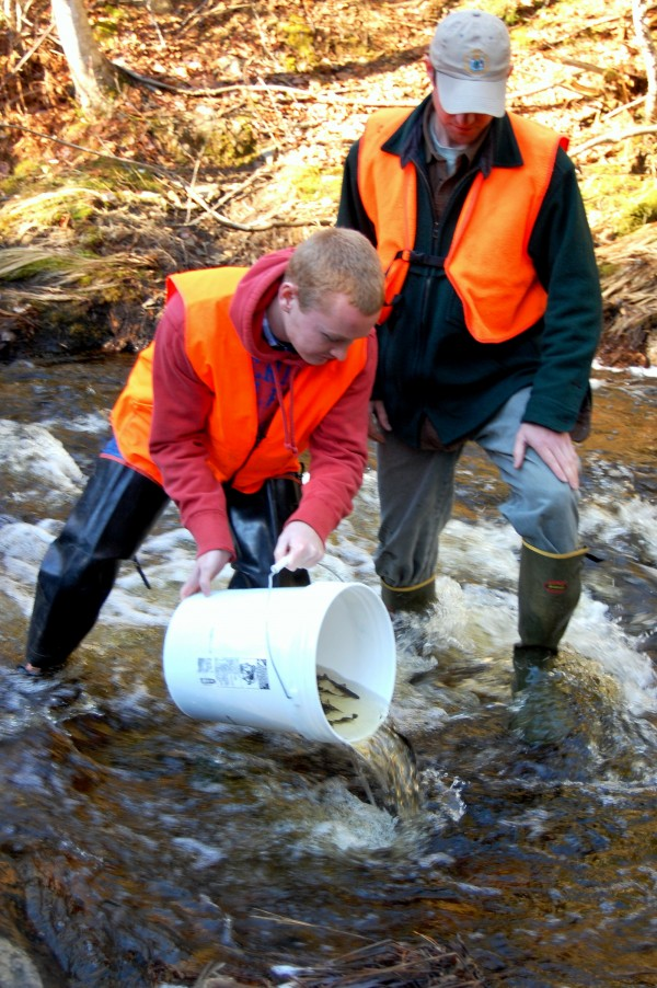 Kyle Gallagher (left), a Washington Academy junior from East Machias, eases a load of juvenile salmon into Creamer Brook in a remote area of Washington County's Township 19. Helping him keep his footing in the rocky, rushing brook is Colby Bruchs, a fish biologist with the Maine Department of Marine Resources.