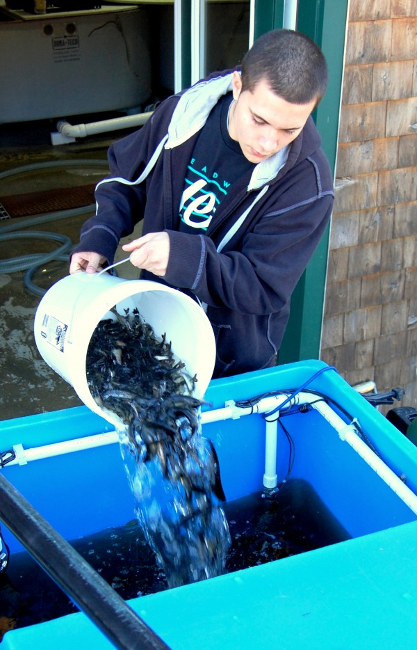 Anthony Soto, a Washington Academy senior from Pembroke, was among students who help load thousands of juvenile salmon into a truck-mounted, oxygenated truck before students headed out of East Machias with a team of professional fish biologists to introduce the salmon into the wild. More than 50,000 North Atlantic salmon were raised from eggs at the East Machias Aquatic Research Center with the help of Washington Academy science students.