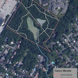 Canco Woods neighbors join land trust, line up to buy and protect urban forest site