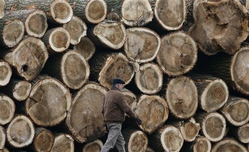 A man walks past cut trees in Duisburg, Germany on Tuesday, Nov. 13, 2012. While temperatures in Germany drop, these tree trunks wait to be dried.