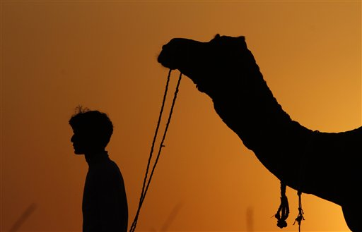 In this Friday, Nov. 23, 2012 photo, an Indian man leads his camel during the annual cattle fair in Pushkar, Rajasthan, India.  Pushkar, located on the banks of Pushkar Lake, is a popular Hindu pilgrimage spot that is also frequented by foreign tourists who come to the town for the annual cattle fair and camel races.