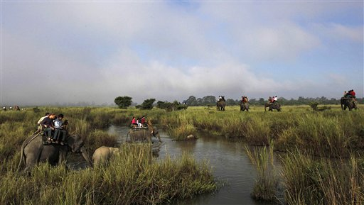 Tourists ride on elephants inside the Kaziranga national park in Kaziranga about 156 miles east of Gauhati, Assam, India on Thursday, Nov. 1, 2012. After two devastating waves of floods, the park which is home to the one horned Rhinoceros was reopened for tourists Thursday.