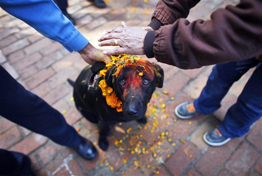 Nepalese policemen apply vermillion powder and perform rituals on a dog during the Tihar festival celebrations at a police kennel division in Katmandu, Nepal on Tuesday, Nov. 13, 2012. Dogs are worshiped to acknowledge their role in providing security during Tihar festival, one of the most important Hindu festivals dedicated to the worship of the Goddess of wealth Laxmi.