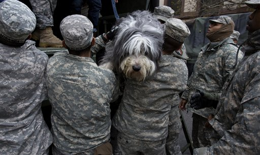 A dog named Shaggy is handed from a National Guard truck to National Guard personnel after the dog and his owner left a flooded building in Hoboken, N.J., Wednesday, Oct. 31, 2012, in the wake of superstorm Sandy. Some residents and pets are being plucked from their homes by large trucks as parts of the city are still covered in standing water.