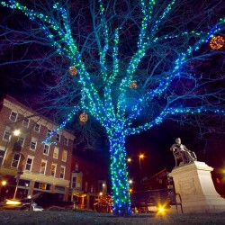 Let the holidays begin! Portland's Christmas tree gets moved into place