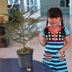 Ting-ting Ray-Smith, age 5, of Milbridge, plans to use a Chinese New Year theme to decorate her tree for the WHRL Tree Auction. Ting-ting attends Milbridge Elementary School and is the daughter of Brittany Ray and Ron Smith.