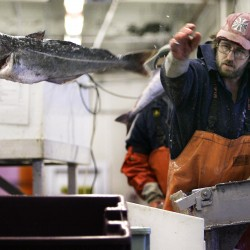 Fish aid money for Maine, Northeast remains uncertain