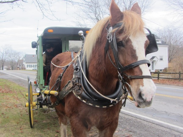 Don, a 1,900-pound Belgian draft horse, pulls a carriage loaded with locally grown and produced foods along Old County Road in Rockland.