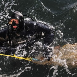 Maine fishermen say there's plenty of cod. Scientists might give them the chance to prove it.