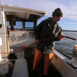 Scallop season expected to end early in Cobscook Bay