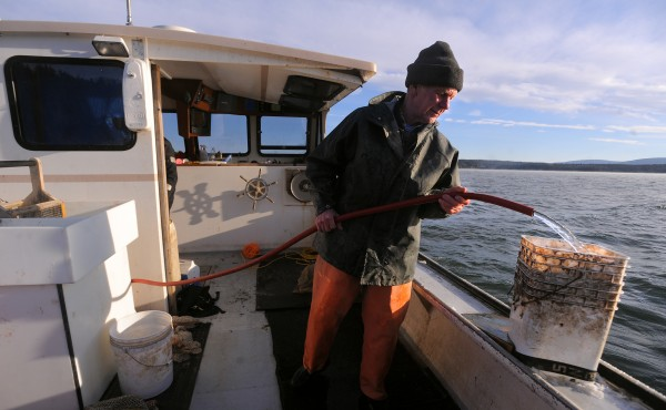 Steve Strout, captain of the lobster boat Elana Jane, prepares the boat to support Ed Monat and other divers as they search for scallops near Bartlett Island in Blue Hill Bay Sunday.