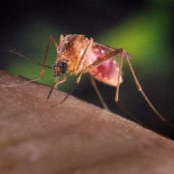 Potentially deadly EEE virus found in 3 more southern Maine mosquito pools