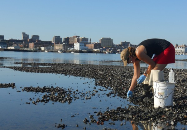 Elizabeth Thompson, a researcher for Friends of Casco Bay, tests the pH levels of the mud in Mill Cove in South Portland, across the harbor from downtown Portland.