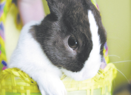 &quotGreat fun, but too cold for the bunny trail. Pass the hot cider!&quot — Peter Cottontail, Easter Bunny, visiting dignitary