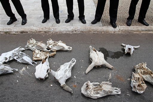 Oxen skulls representing animals killed by the drought lay at the feet of security agents outside Planalto presidential palace in Brasilia, Brazil, Tuesday, Dec. 4, 2012. Brazilian farmers affected by the drought brought oxen skulls to the presidential palace and are asking the president to pardon their government bank debts.