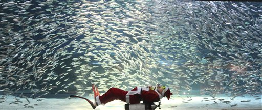 Dressed in a Santa Claus outfit, a diver performs with sardines at the Coex Aquarium in Seoul, South Korea on Tuesday, Dec. 11, 2012. Christmas is one of the biggest holidays in South Korea, where over half of the population are Christians.