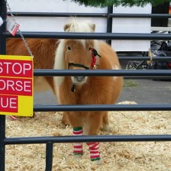 Santa and the Miniature horse ambassadors spread holiday cheer, and help raise funds for hay and grain for the horses at Last Stop Horse Rescue, 501c3 non profit org.