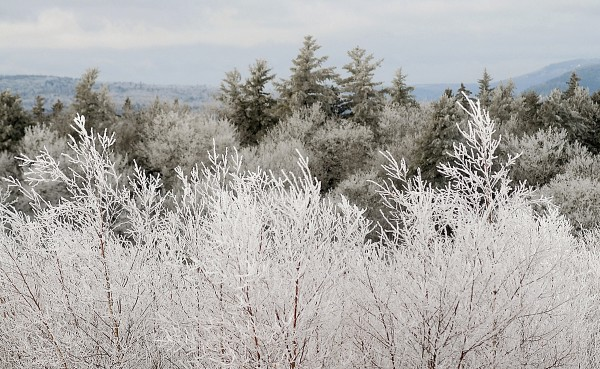 Recent freezing rain covers trees with ice in Dedham on Feb. 2, 2012, with aiew of surrounding hills from Chase Mountain.