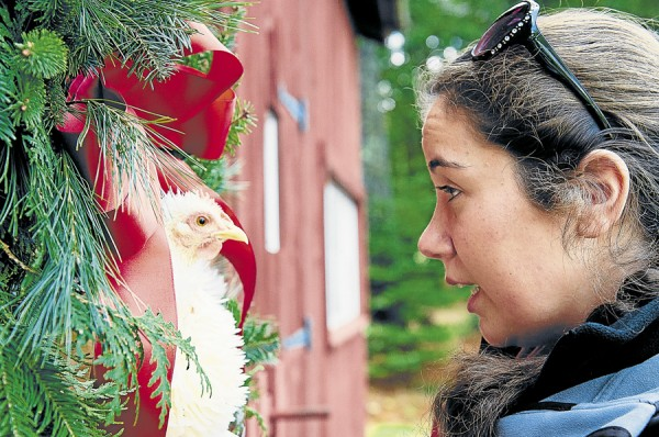 Jesse Schwarcz of Orrington briefs Squeaky, a bantam cochin frizzle chicken, on what she needs for photos before placing Squeaky inside a wreath. Schwarcz, a photographer, and her mother completed their fourth annual Holiday Hens photo shoot in November.