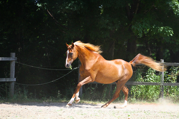 This Arabian named My Imaginary Friend (and often called &quotImy&quot) is a 28-year-old school horse owned by Andrea Kelley that lives at Wild Ivy Farm in Bangor. Imy neither looks nor acts his age.