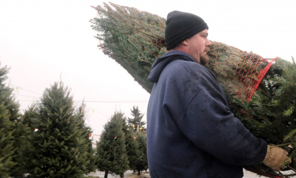 Jesse Young carries a Christmas tree to a customer's vehicle at Tim's Christmas Trees in Bangor Sunday. The sales started a day after Thanksgiving and it has been steady. Co-owner  Diane Sprague said that even the rain didn't keep people from buying Christmas trees. Carey Small and his wife, Kathy, of Glenburn stopped to pick out a tree quickly and then they were on their way home to watch the Patriots game and decorate the tree.