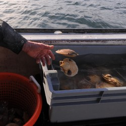 Maine scallop panel supports rotating closure concept
