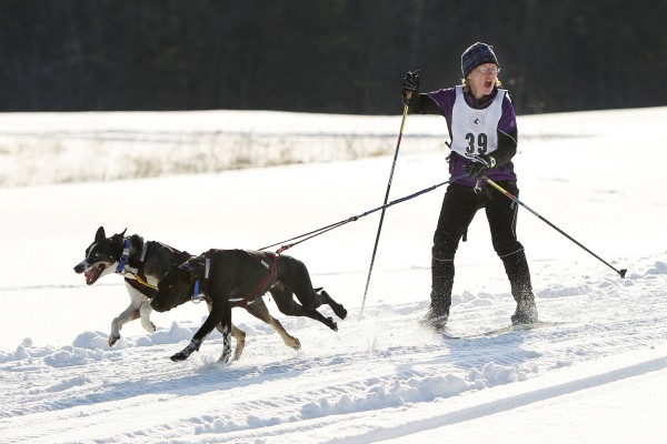 Kelley McGrath of Tamworth, N.H., competes in the two-dog skijoring race sponsored by the New England Sled Dog Club at Sunset Ridge Golf Course in Westbrook on Sunday, Jan. 6, 2013. The sled dog races were part of the Winter West Festival.