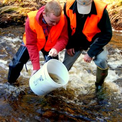 Maine Department of Marine Resources Fish Biologist Colby Bruchs (right) assists Washington Academy student Kyle Gallagher in November 2012 in stocking Creamer Brook in Washington County's Township 19 with young North Atlantic salmon raised from eggs in an East Machias hatchery established by the Downeast Salmon Federation.