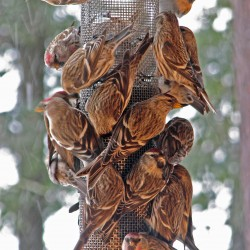 Turn those backyard feeders into an avian fast-food restaurant