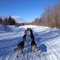 Lack of snow forces cancellation of Eagle Lake sled dog races