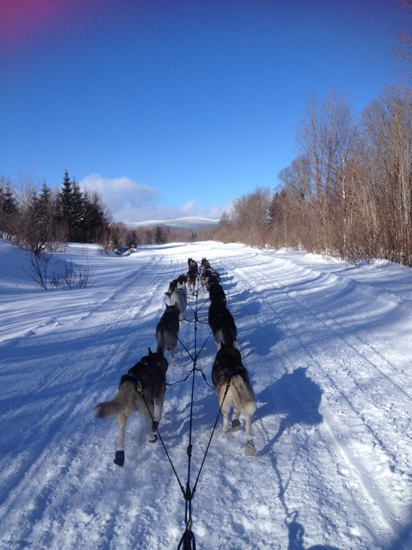 South Portland musher Jaye Foucher runs her team on a picture-perfect trail near Sugarloaf recently. Foucher plans on entering all three of Maine's distance sled dog races this year in Eagle Lake, Greenville and Fort Kent.