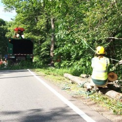 Workers topple a tree to make way for the Shore Road path on July 5, 2012. The town spent about $165,000 more than expected on the project, which was dedicated in October 2012.