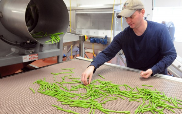 Brian McCarthy sorts dilly beans during a test run of his equipment at the Coastal Farms and Foods facility in Belfast. McCarthy is starting a dilly bean processing business under the name of Magic Dilly Beans. The facility provides infrastructure to small produce processing businesses and it is now home to about six new and established processors and producers.