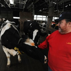 Maine farmers, labor leaders to draw attention to plight of dairy farmers
