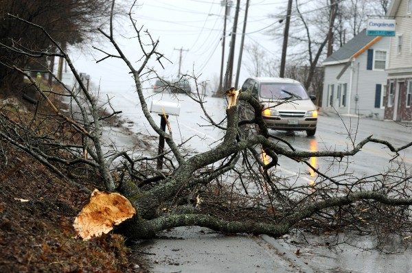 Traffic maneuvers around a downed tree on Route 1A in Hampden during a storm that brought heavy wind gusts and rain to the region Wednesday night into Thursday.