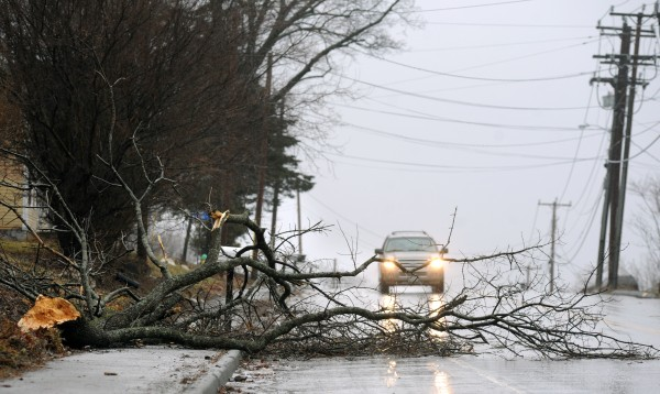Traffic maneuvers around a downed tree on Rt. 1A in Hampden during a storm that brought heavy wind gusts and rain to the region Wednesday night into Thursday.