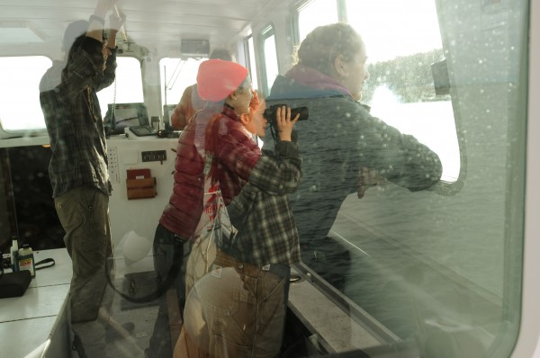 Lindsay Nielsen (in reflection with binoculars) scans the shore of Little Duck Island as College of the Atlantic students also look for signs of gray seals as the COA-owned boat, the Osprey, takes staff and students to Mount Desert Rock to take part in a gray seal population study.