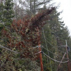 Tree knocks out power to 4,400 on MDI