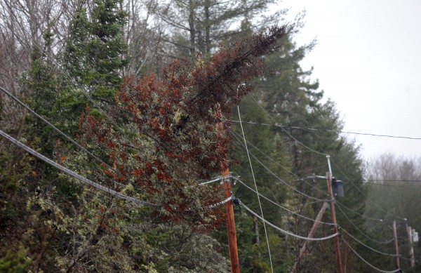 A tree brought down a power line on Eastern Avenue in Holden after being blown over during a storm that brought heavy wind gusts and rain to the region Wednesday night into Thursday.