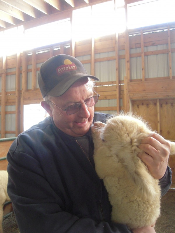 Dick Porter, owner of Spudland Alpacas in Blaine, greets Apollo, one of six baby alpacas, called cria, born on the farm last year.
