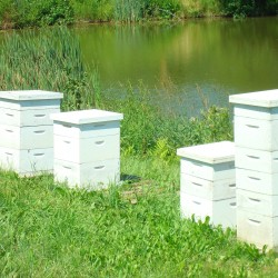 Beginner beekeeping course Sept. 22