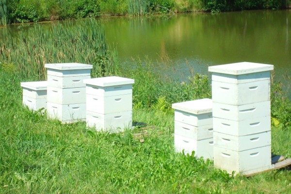 Peter Cowin set up hives to pollinate surrounding crops and flowers in Hampden. Cowin said 60,000 hives are brought to Maine each spring to help pollinate crops.