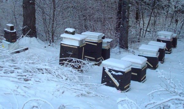 These honeybee hives have been insulated and wrapped to withstand the Maine winter after having been checked to make sure the bees have plenty of honey for food until spring.