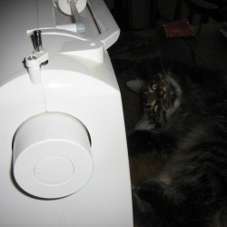 Sissy the cat tries a few shenanigans while her human attempts to sew a fine seam.