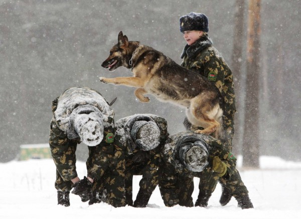 A Belarussian military instructor trains her dog in a frontier guards' cynology center near the town of Smorgon, some 87 miles northwest of Minsk on Jan. 11, 2013. The center prepares instructors with trained dogs for guarding Belarus' border and also sells puppies and dogs, which are not fit for service at the border, to civilians in the country.