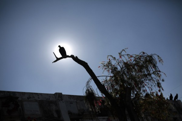 A vulture perches on a tree next to graves in the Municipal Cemetery in Guatemala City on Jan. 29, 2013.