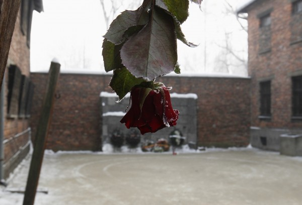 A rose hangs near the &quotDeath Wall&quot at the Auschwitz concentration camp during a ceremony marking the 68th anniversary of the liberation of Auschwitz by Soviet troops, and to remember the victims of the Holocaust, in Auschwitz-Birkenau Jan. 27, 2013.